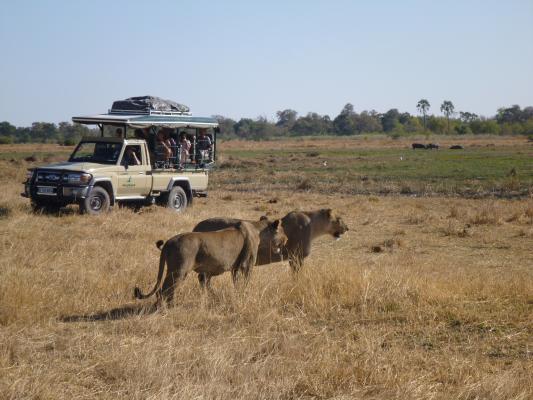 Löwe und 4x4 Safarifahrzeug in der trockenen Steppe von Botswana