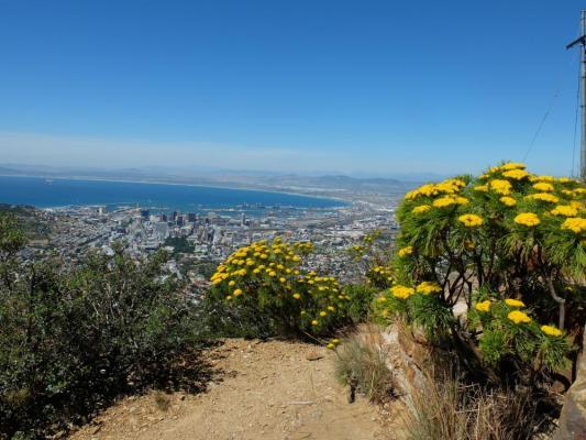 Stadt und im Hintergrund der majestätische Tafelberg