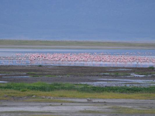 Flamingos am Ngorongor Krater