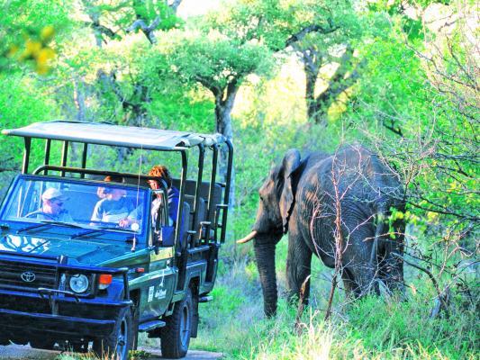 Elefant und 4x4 Safarifahrzeug im dichten Busch des Krüger National Parks