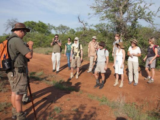 Geführte Busch Safari im Balule Private Game Reserve