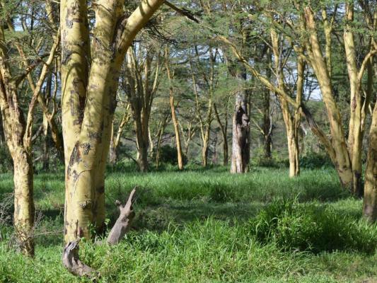 Wald und Steppe nahe des Lake Naivasha