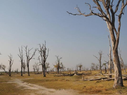 Dürre Landschaft im Savuti Tal
