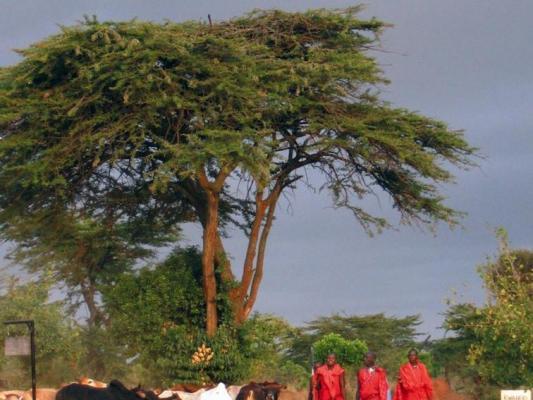 Massai mit Tierherde in der Masai Mara