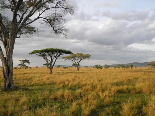 Panorama des Masai Mara Nationalparks