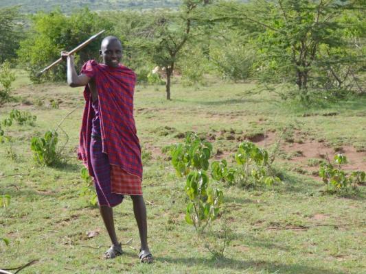 Massai Kämper in Kenia