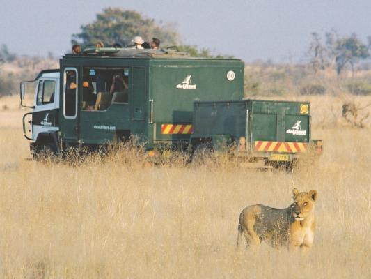 Drifters Truck neben Löwen