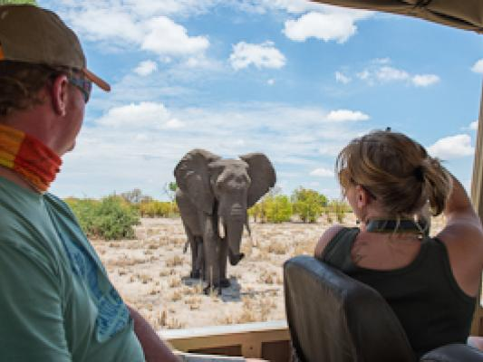Reisende fotografieren einen Elefanten vom offenen Safari Jeep