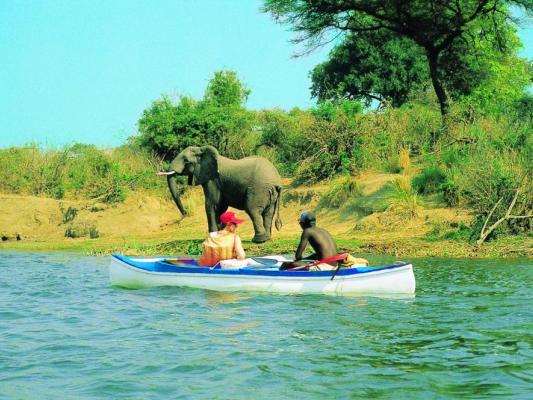 Kanusafari bei den Mana Pools auf dem Zambezi River: Elefant am Flussufer