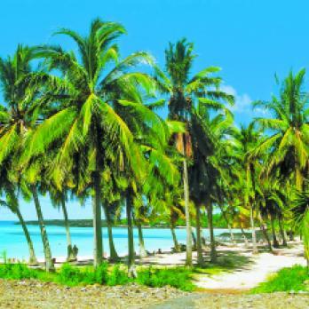Mosambik Safaris & Reisen: Traumhafte Palmstrände am indischen Ozean au einer Mosambik Reise erleben