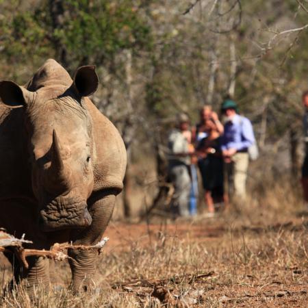 Wildtieren Botswanas & Simbabwes - Nasshorn