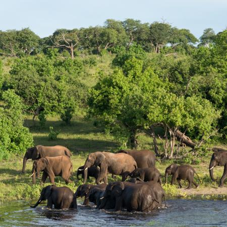 Bezaubernde Elefantenherde am Chobe Fluss auf der Botswana Safari Reise