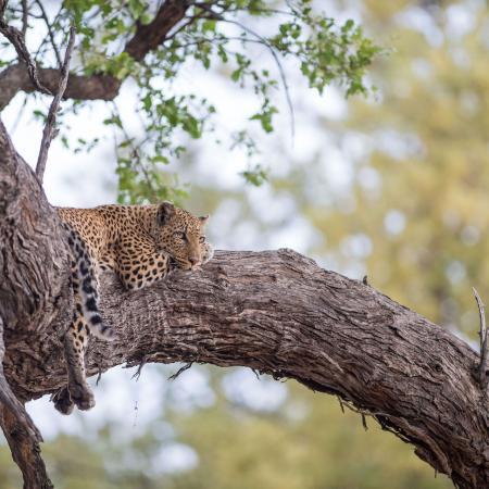 Botswana Wildside & Rhinos - 17-tägige Zelt Safari durch das Naturparadies Botswana