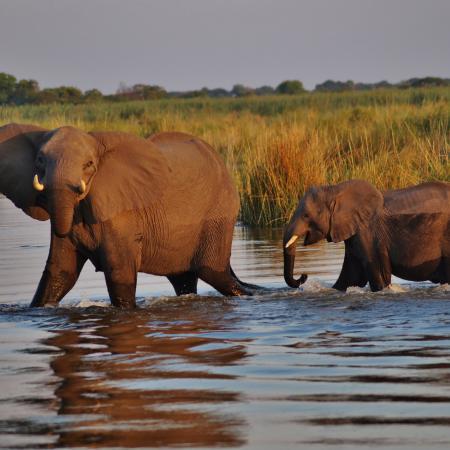 Erlebnisreise Botswana - Elefanten im Chobe Nationalpark