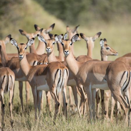 Afrika Tour für Entdecker durch Botswana
