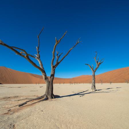 Südwestafrika Rundreise: Tour zu den Höhepunkten in Namibia