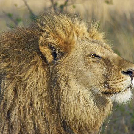 Botswana Simbabwe Safari