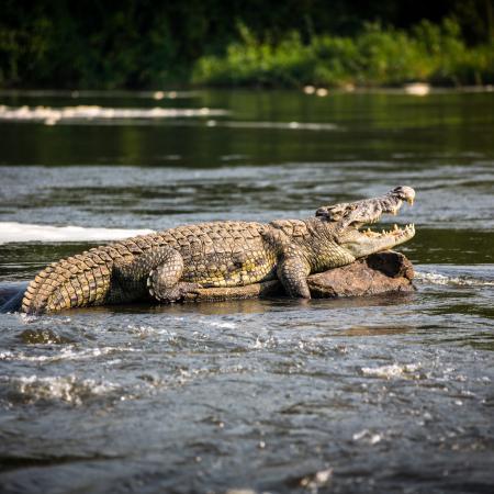 Krokodil in Tanzania - Beste Tierbeobachtung